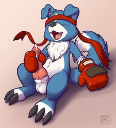 anthro balls blue_fur boxing_gloves canine claws closed_eyes digimon fur gaomon headband knot male mammal masturbation open_mouth penis precum simple_background sitting solo the_secret_cave white_fur wolf